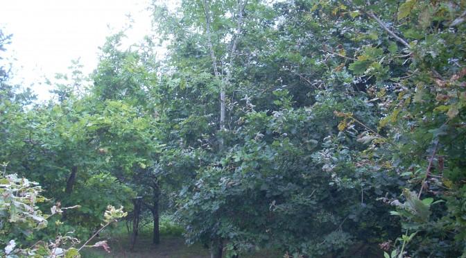 Little Meadow Planning Application Alfold Road