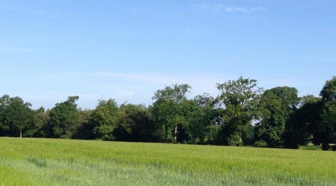 Cranleigh's Green Fields say No to housing dump