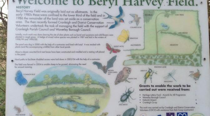 Beryl Harvey Conservation