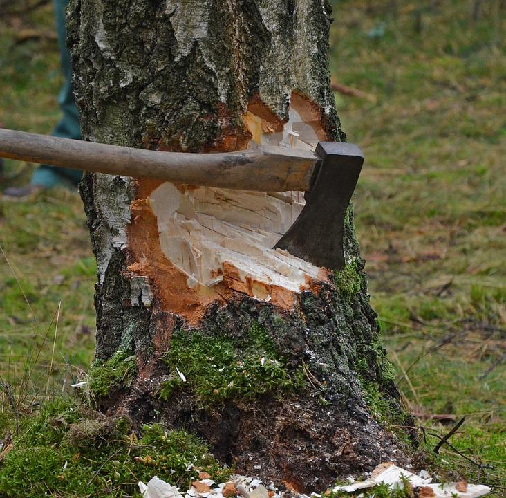Berkeley Homes Tree Objection